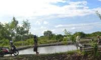 Hamparan tanah timbul di wilayah pantai Kesenden, Kota Cirebon.
