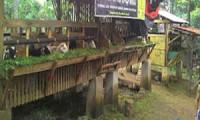 Berita Online Cirebon - Kampung Domba di Dukupuntang